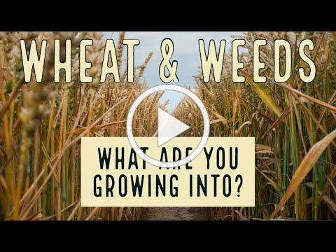 Wheat & Weeds: What are you growing into?