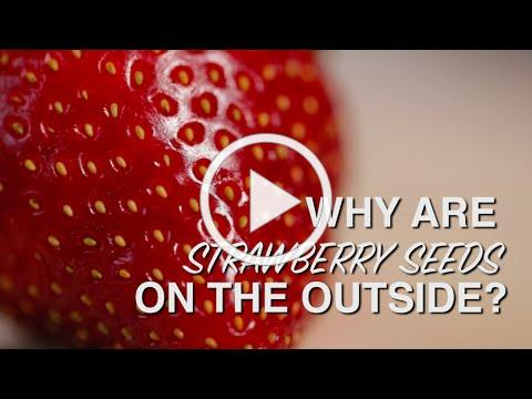 Why Are Strawberry Seeds on the Outside?
