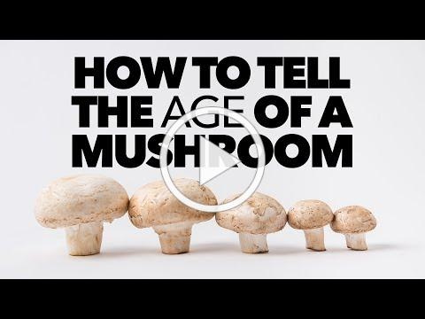 How to Tell the Age of a Mushroom