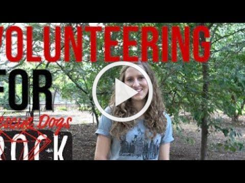 Meet Kelsey - Rescue Dogs Rock NYC Volunteer Coordinator
