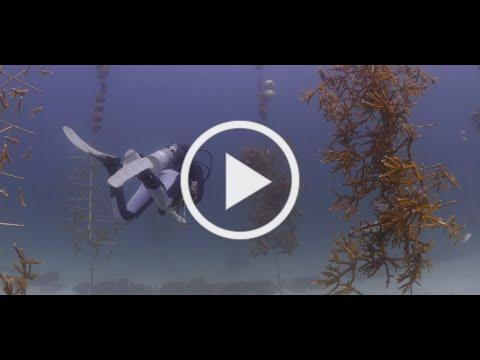 Florida Keys National Marine Sanctuary Restoration Blueprint