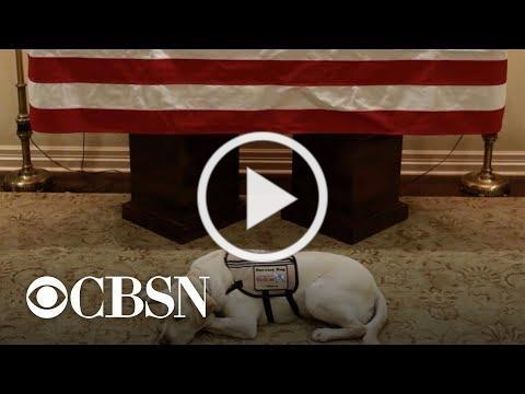 President Bush's service dog Sully guards his casket