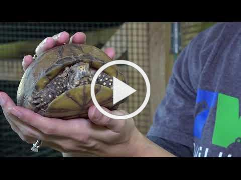 TWRC Wildlife Center #GivingTuesday Goes Online to Rescue the Injured and Orphaned Wildlife