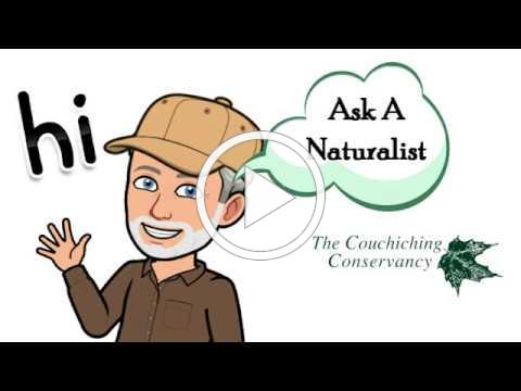 Ask a Naturalist - Sparrows